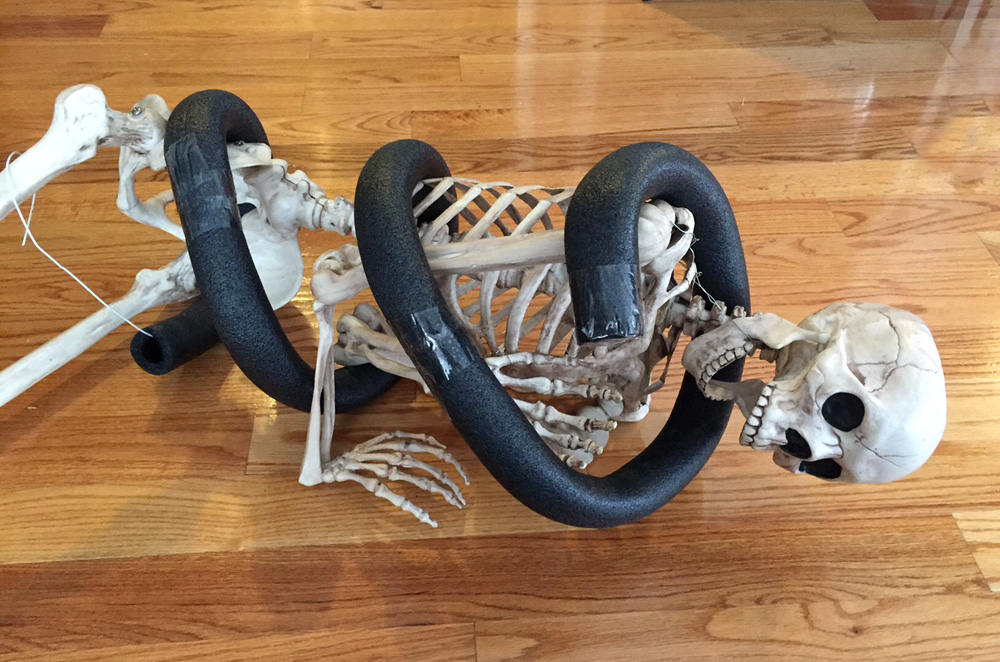 Papier maché snake -- positioning the snake body on the skeleton