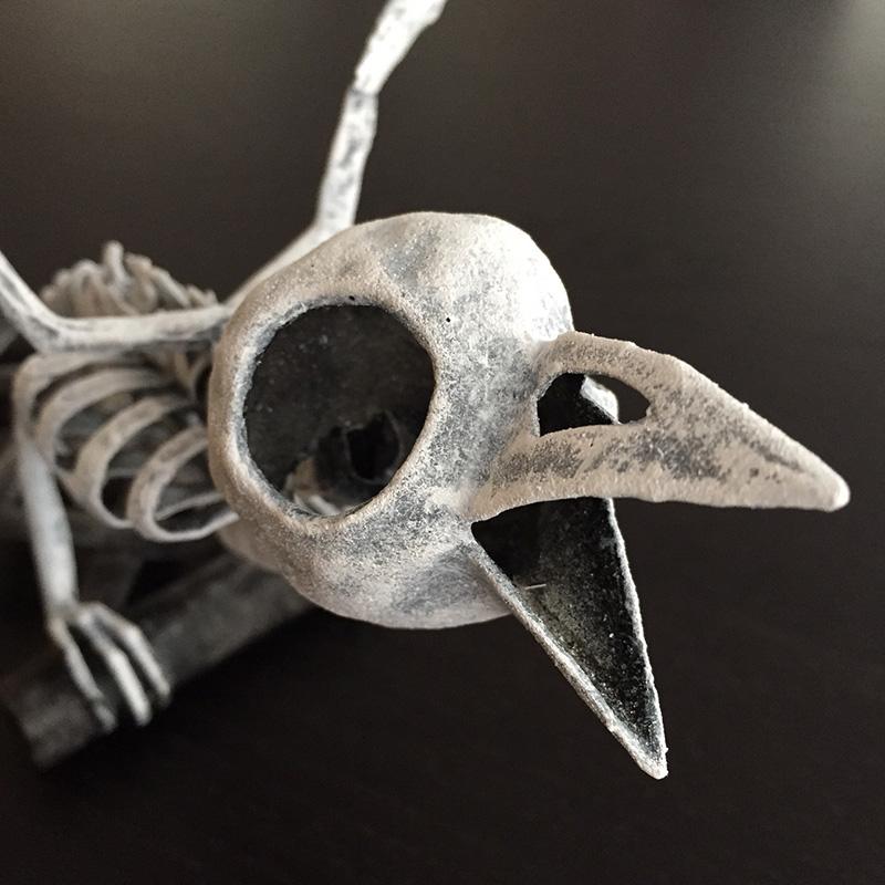 Bird skeleton - close up of skull
