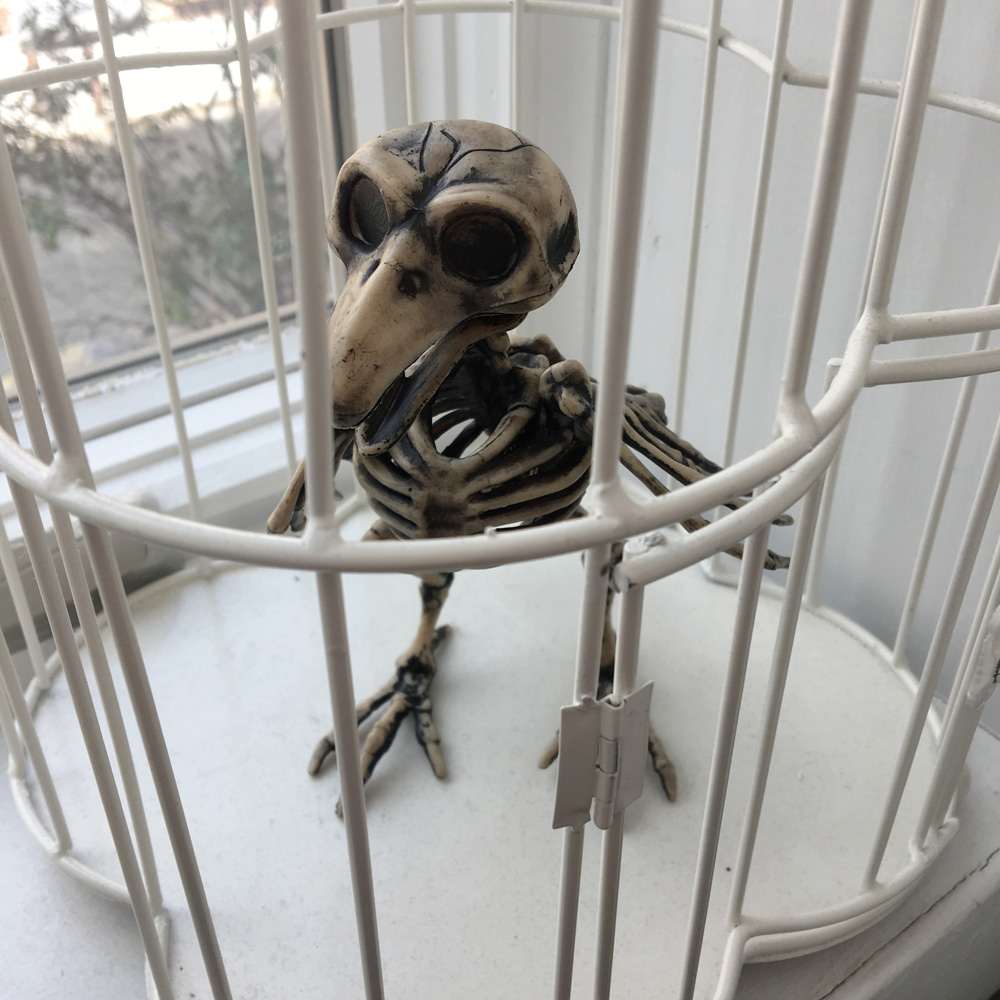 Finished Repainted plastic bird skeleton
